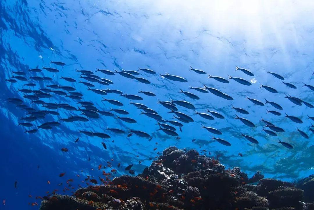 title='保护海洋生物,挽救一片蔚蓝'
